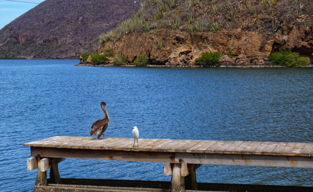 Copper Canyon - Los Mochis and Topolobampo birds sitting on dock